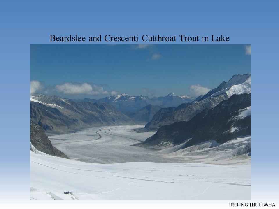 Beardslee and Crescenti Cutthroat Trout in Lake Crescent