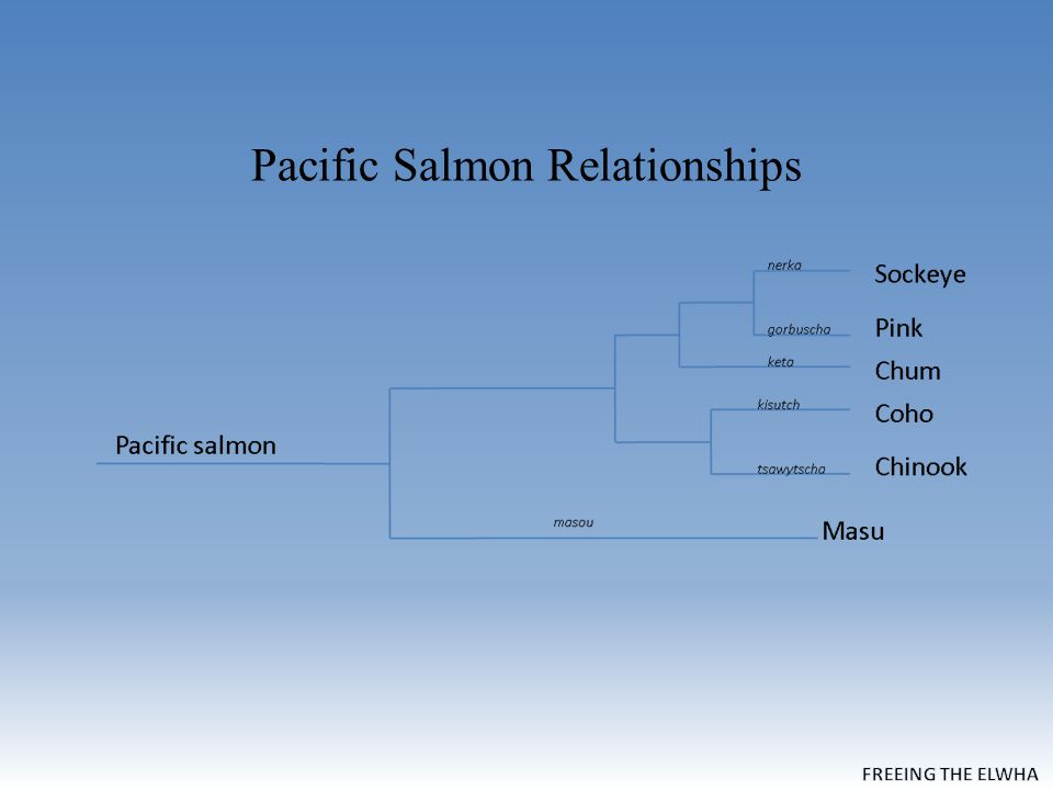 Pacific Salmon Relationships