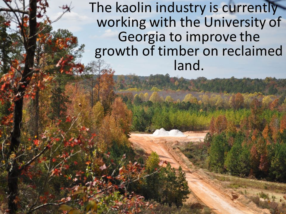 The kaolin industry is currently working with the University of Georgia to improve the growth of timber on reclaimed land.