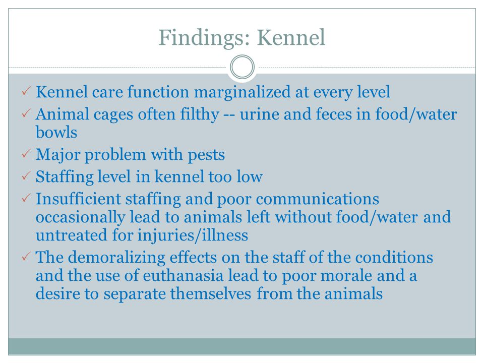 Findings: Kennel  Kennel care function marginalized at every level  Animal cages often filthy -- urine and feces in food/water bowls  Major problem