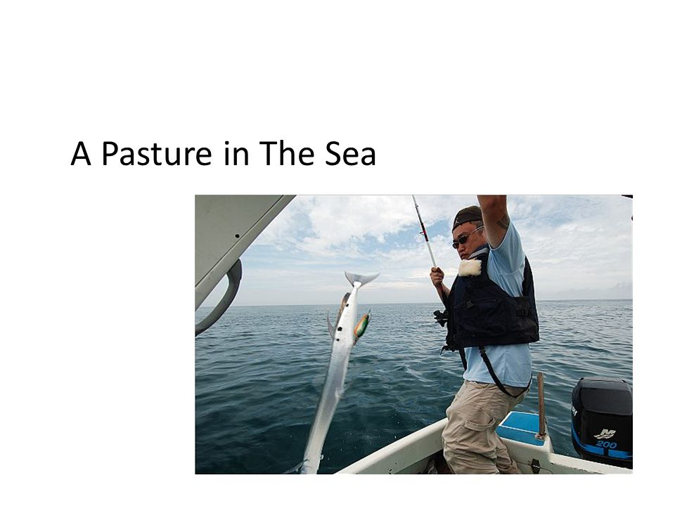 A Pasture in The Sea