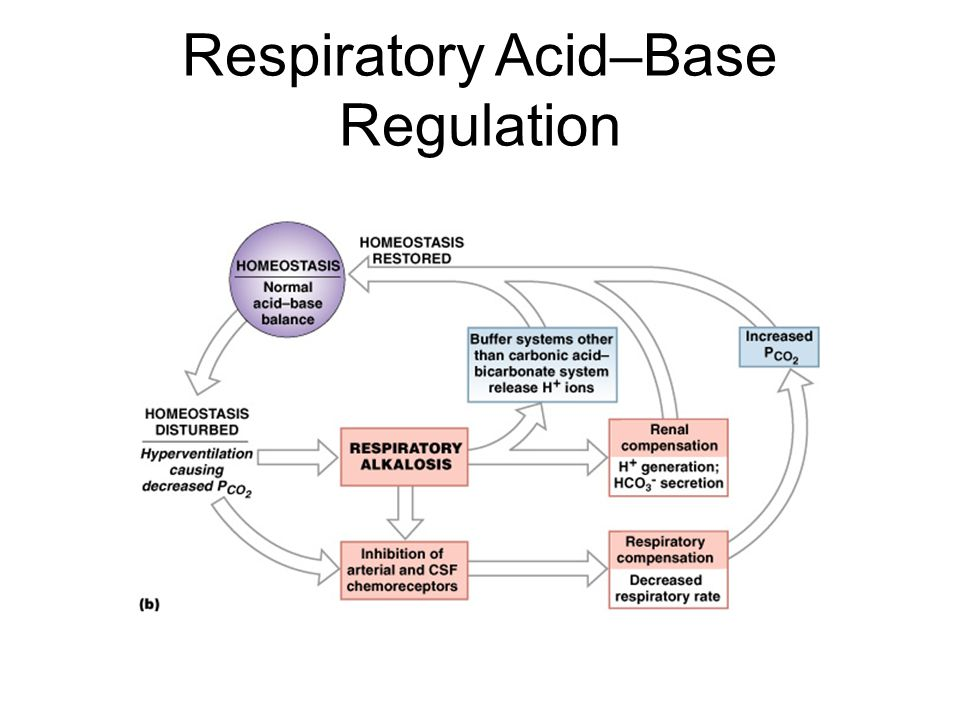 Respiratory Acid–Base Regulation Figure 27–12b