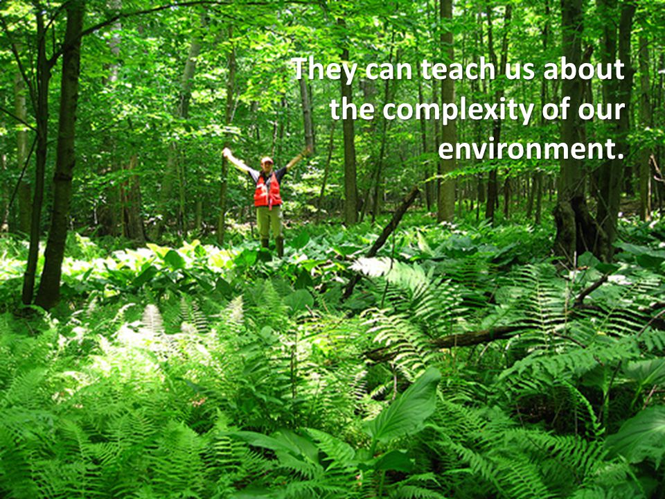 They can teach us about the complexity of our environment.