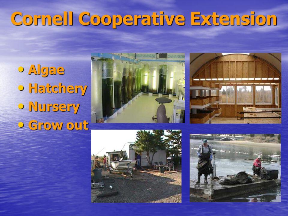 Cornell Cooperative Extension Algae Algae Hatchery Hatchery Nursery Nursery Grow out Grow out