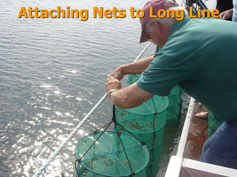 Attaching Nets to Long Line