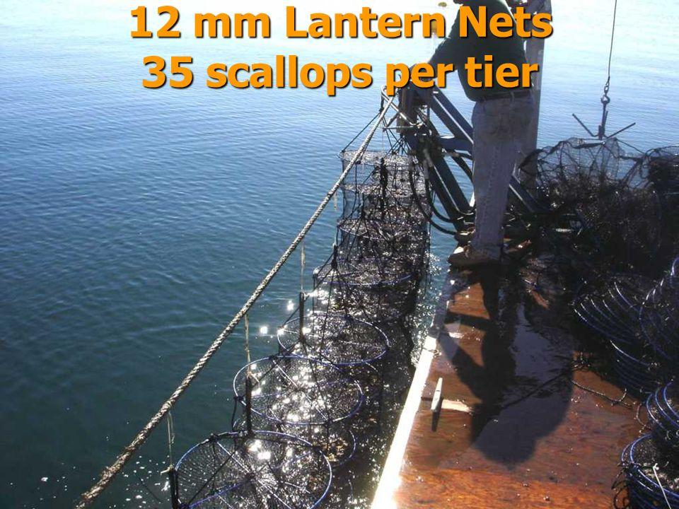 12 mm Lantern Nets 35 scallops per tier