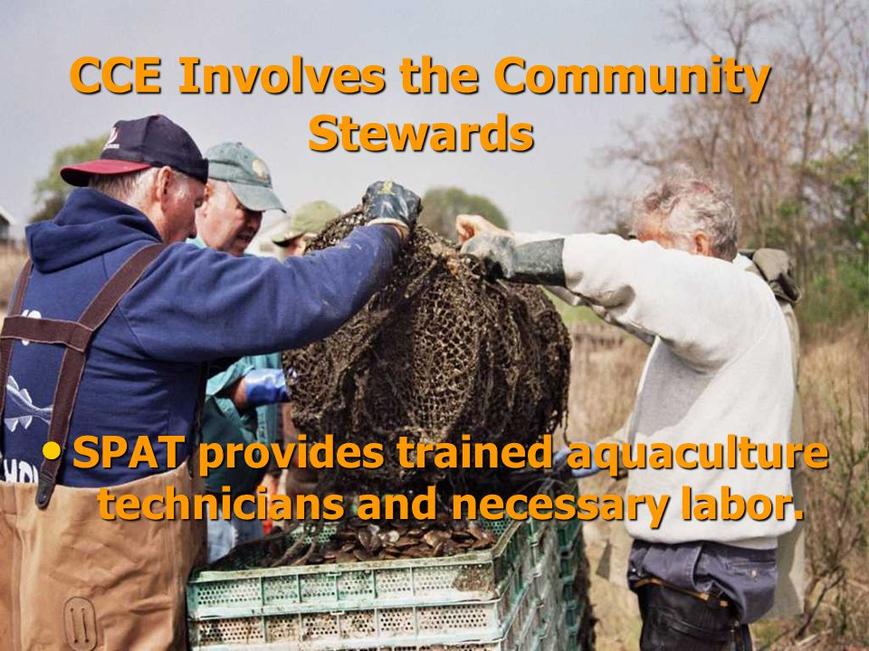 CCE Involves the Community Stewards SPAT provides trained aquaculture technicians and necessary labor.
