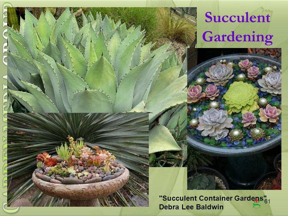 61 Succulent Gardening Succulent Container Gardens Debra Lee Baldwin