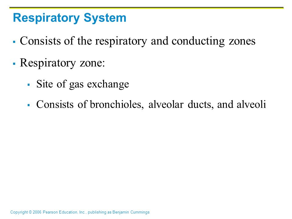 Copyright © 2006 Pearson Education, Inc., publishing as Benjamin Cummings Respiratory System  Consists of the respiratory and conducting zones  Respiratory zone:  Site of gas exchange  Consists of bronchioles, alveolar ducts, and alveoli
