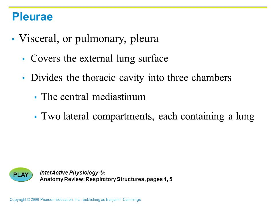 Copyright © 2006 Pearson Education, Inc., publishing as Benjamin Cummings Pleurae  Visceral, or pulmonary, pleura  Covers the external lung surface  Divides the thoracic cavity into three chambers  The central mediastinum  Two lateral compartments, each containing a lung PLAY InterActive Physiology ®: Anatomy Review: Respiratory Structures, pages 4, 5