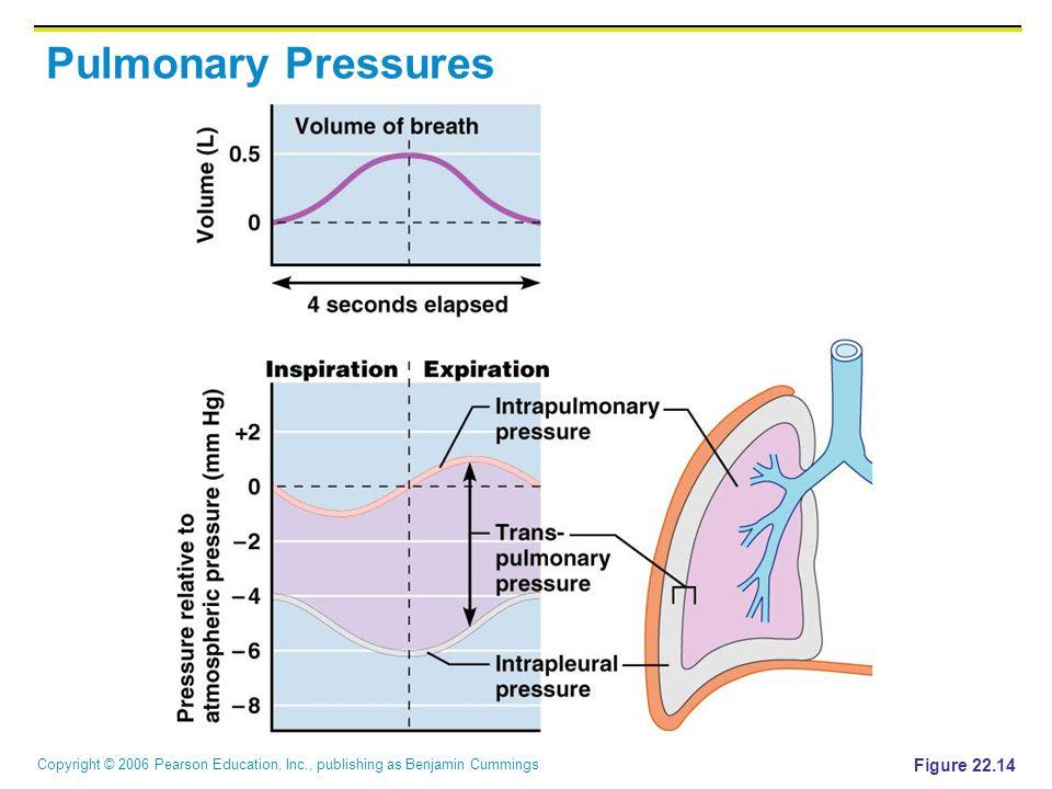 Copyright © 2006 Pearson Education, Inc., publishing as Benjamin Cummings Pulmonary Pressures Figure 22.14