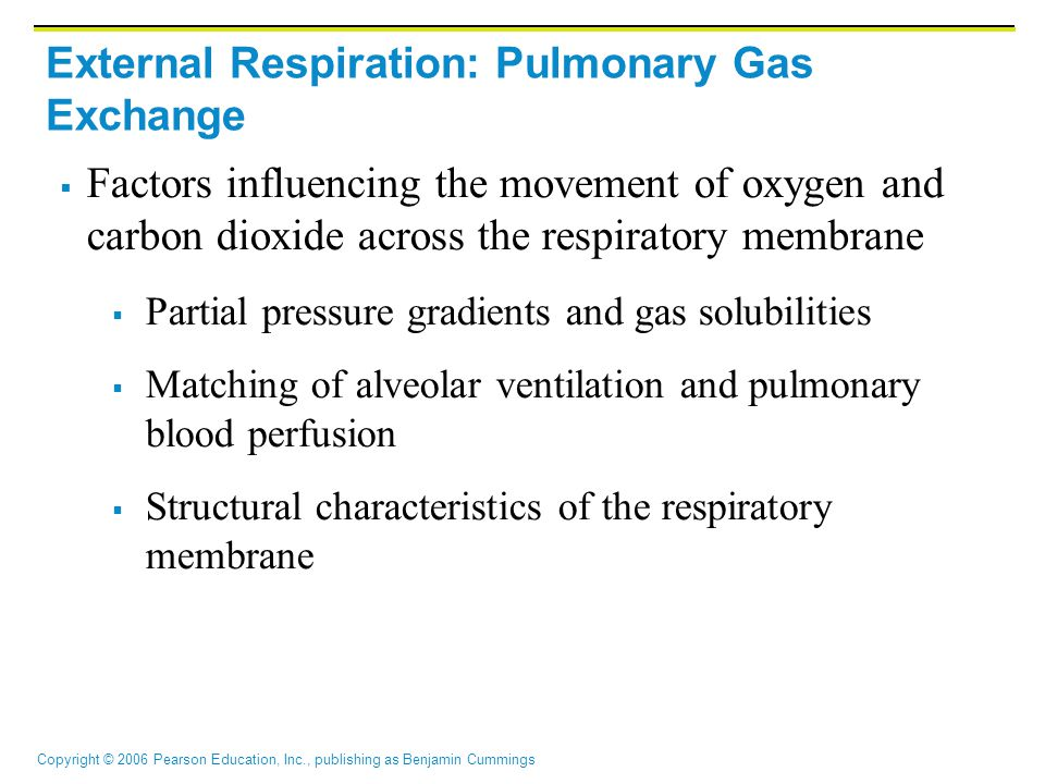 Copyright © 2006 Pearson Education, Inc., publishing as Benjamin Cummings External Respiration: Pulmonary Gas Exchange  Factors influencing the movement of oxygen and carbon dioxide across the respiratory membrane  Partial pressure gradients and gas solubilities  Matching of alveolar ventilation and pulmonary blood perfusion  Structural characteristics of the respiratory membrane