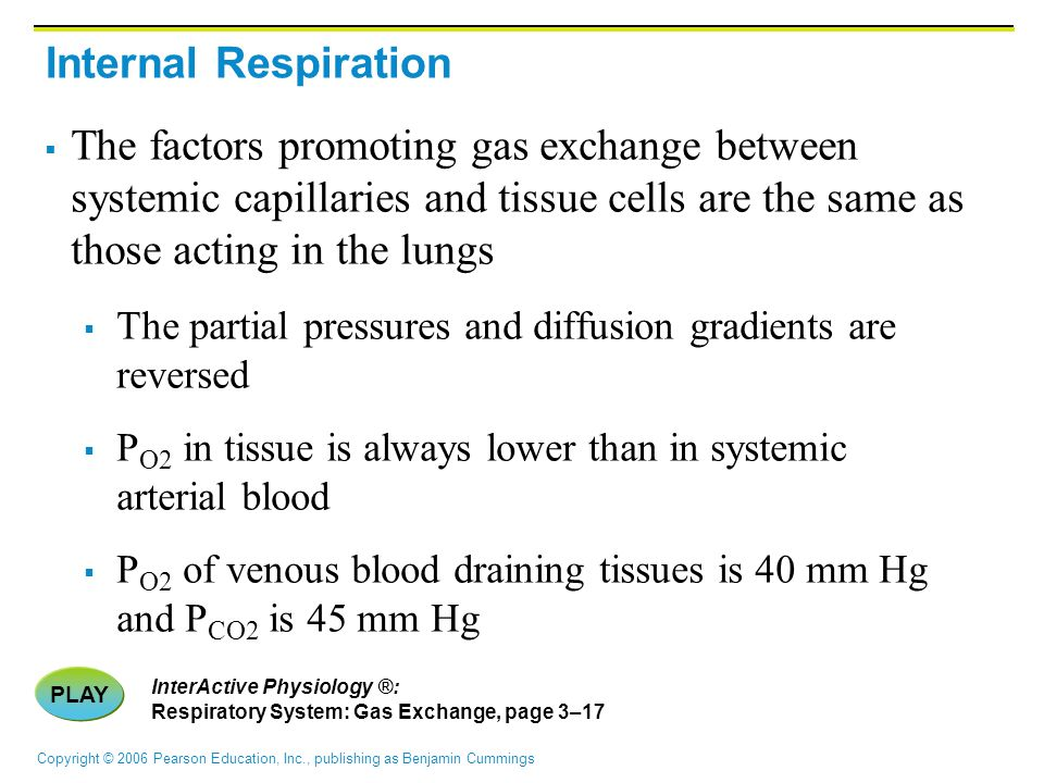 Copyright © 2006 Pearson Education, Inc., publishing as Benjamin Cummings Internal Respiration  The factors promoting gas exchange between systemic capillaries and tissue cells are the same as those acting in the lungs  The partial pressures and diffusion gradients are reversed  P O2 in tissue is always lower than in systemic arterial blood  P O2 of venous blood draining tissues is 40 mm Hg and P CO2 is 45 mm Hg PLAY InterActive Physiology ®: Respiratory System: Gas Exchange, page 3–17