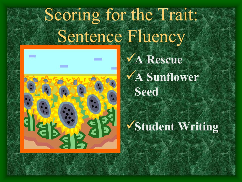 Scoring for the Trait: Sentence Fluency A Rescue A Sunflower Seed Student Writing