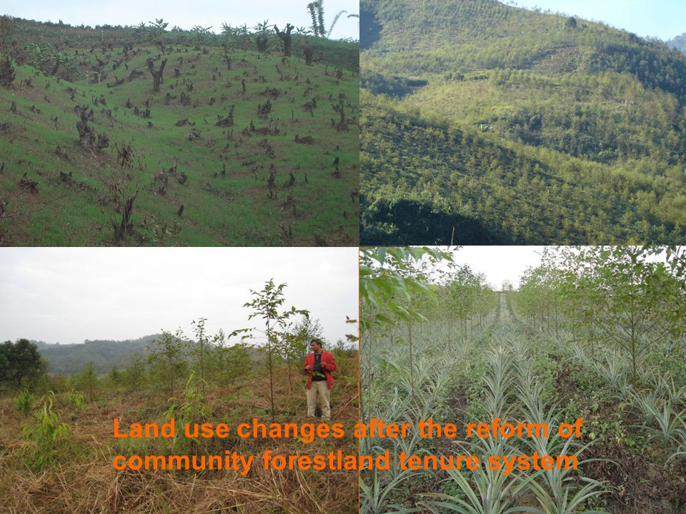 Land use changes after the reform of community forestland tenure system