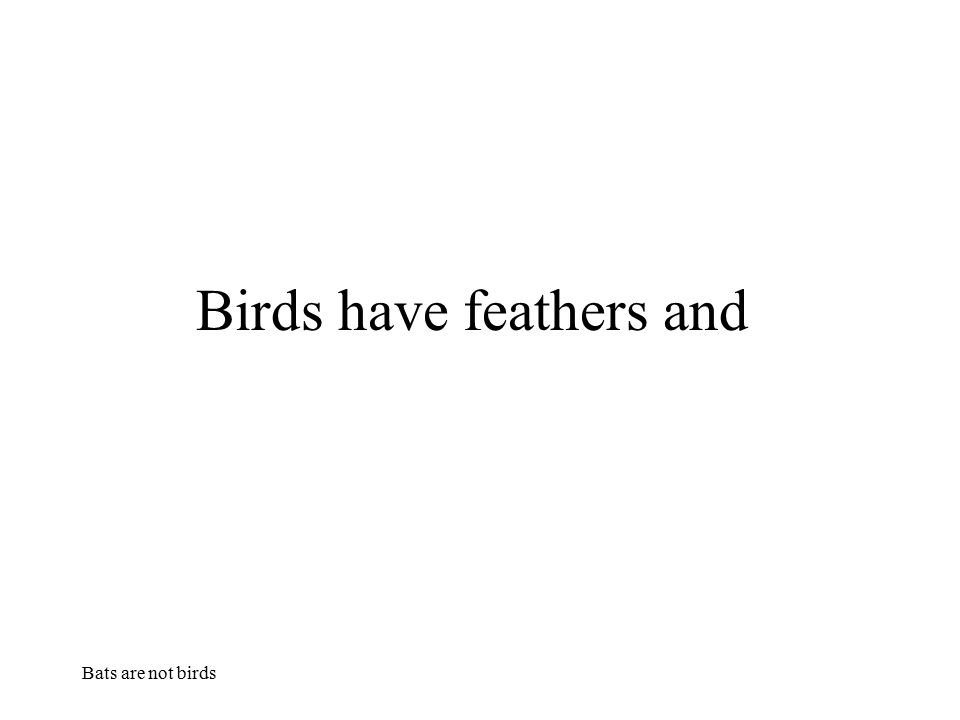 Bats are not birds Birds have feathers and