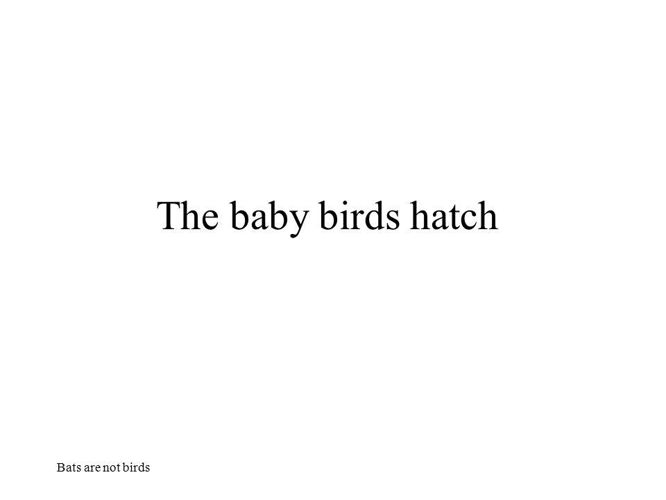 Bats are not birds The baby birds hatch