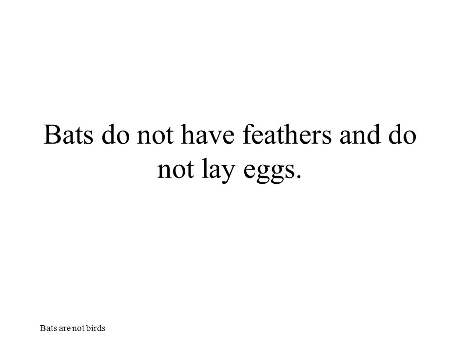 Bats are not birds Bats do not have feathers and do not lay eggs.