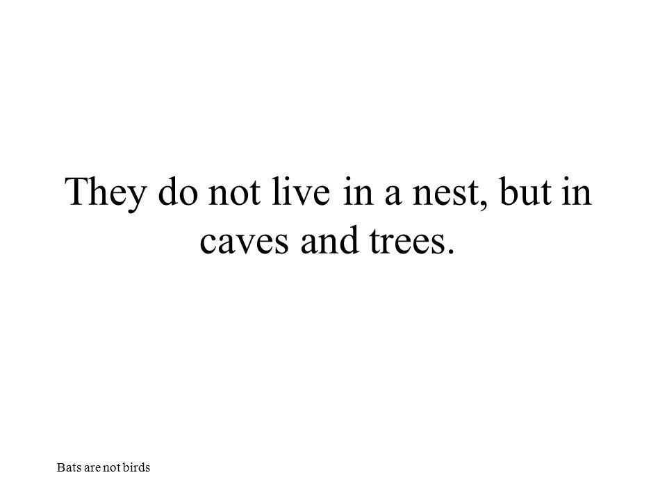 Bats are not birds They do not live in a nest, but in caves and trees.