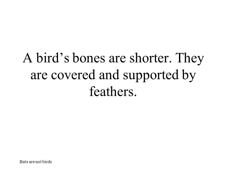 Bats are not birds A bird's bones are shorter. They are covered and supported by feathers.