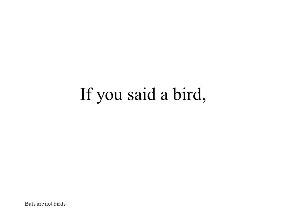 Bats are not birds you are correct,