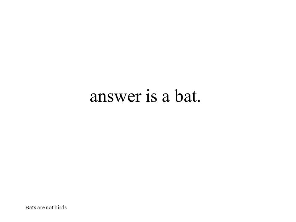 Bats are not birds answer is a bat.