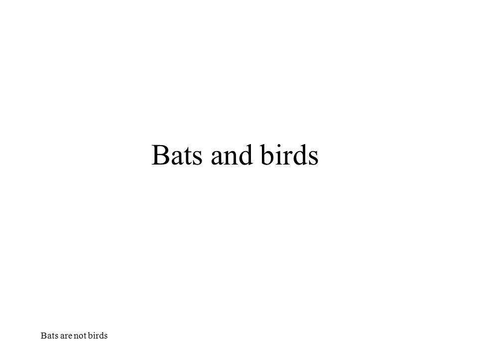 Bats are not birds Bats and birds