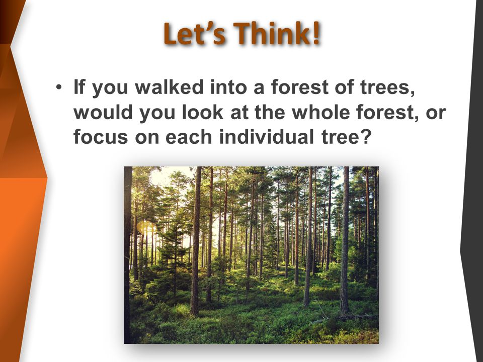 If you walked into a forest of trees, would you look at the whole forest, or focus on each individual tree.