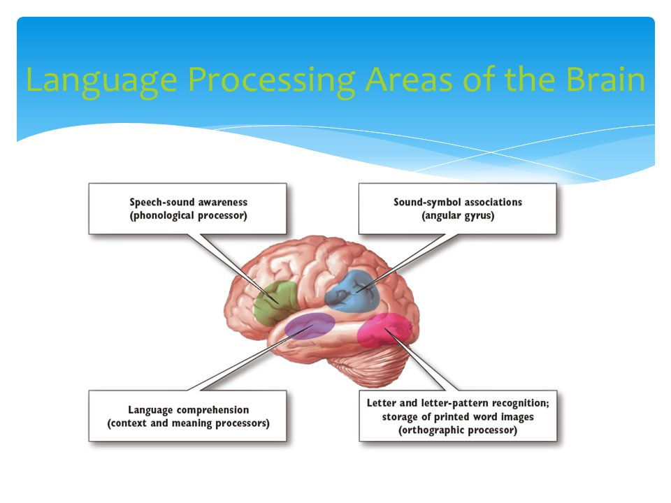 Language Processing Areas of the Brain