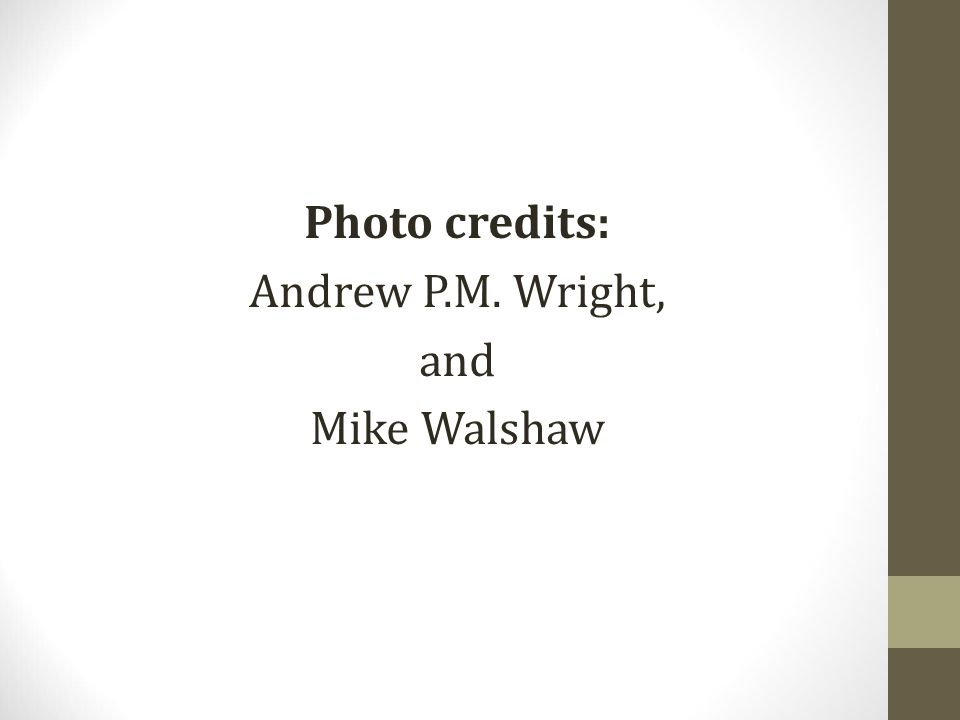 Photo credits: Andrew P.M. Wright, and Mike Walshaw