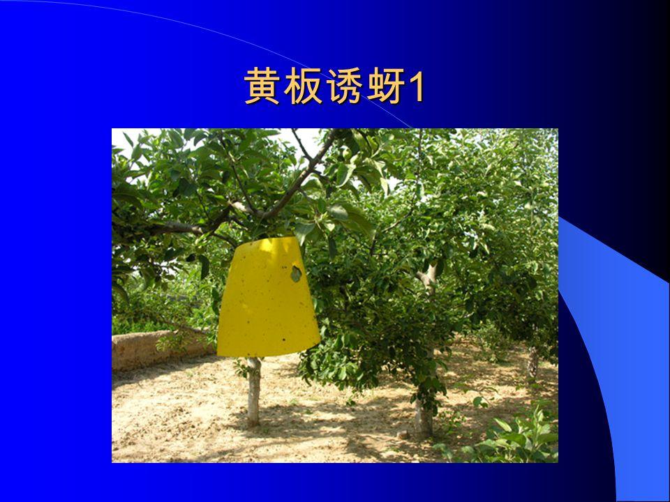 黄板诱蚜 1