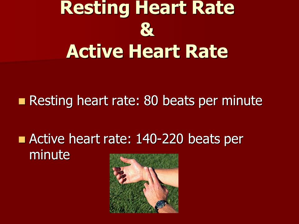 Resting Heart Rate & Active Heart Rate Resting heart rate: 80 beats per minute Resting heart rate: 80 beats per minute Active heart rate: 140-220 beats per minute Active heart rate: 140-220 beats per minute