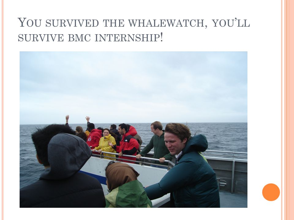 Y OU SURVIVED THE WHALEWATCH, YOU ' LL SURVIVE BMC INTERNSHIP !