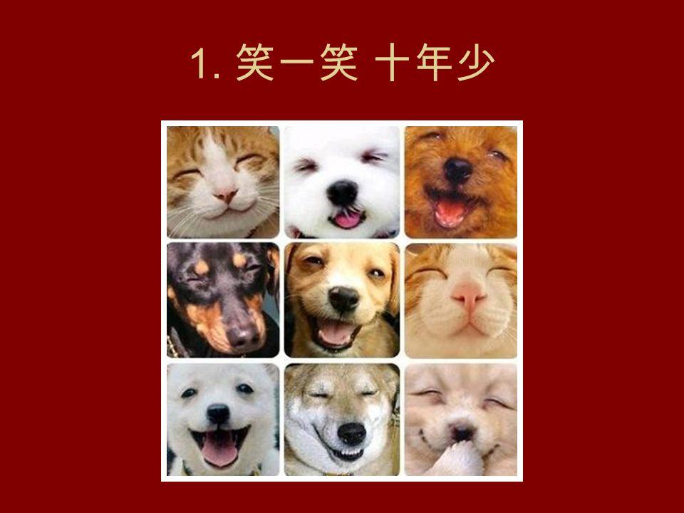 祝你开心,博你一笑 52 幅小动物趣味造影 来源:一则电子邮件 背景音乐 喜洋洋