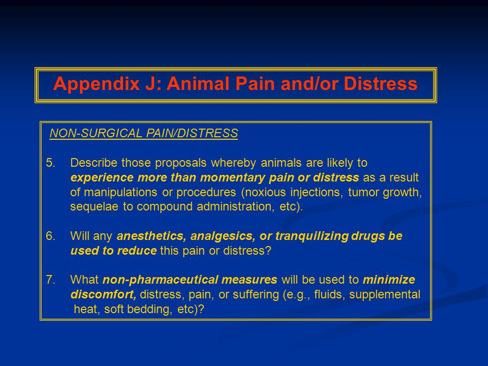 NON-SURGICAL PAIN/DISTRESS 5.Describe those proposals whereby animals are likely to experience more than momentary pain or distress as a result of manipulations or procedures (noxious injections, tumor growth, sequelae to compound administration, etc).