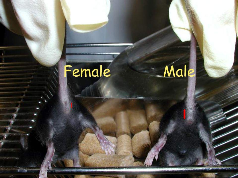 Female Male l l