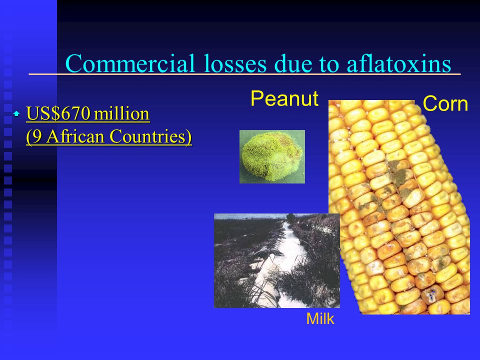 Commercial losses due to aflatoxins  US$670 million (9 African Countries) Peanut Milk Corn