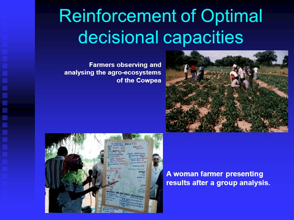 Reinforcement of Optimal decisional capacities Farmers observing and analysing the agro-ecosystems of the Cowpea A woman farmer presenting results after a group analysis.