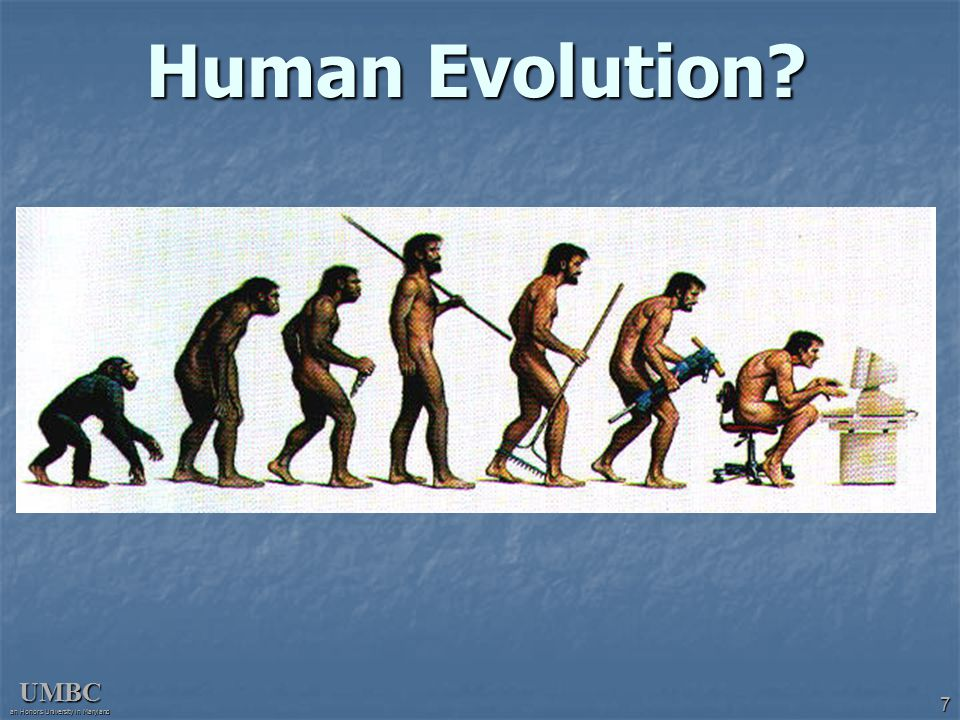 UMBC an Honors University in Maryland 7 Human Evolution?