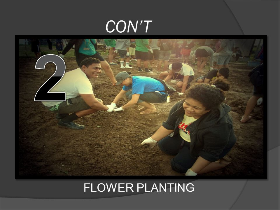 CON'T FLOWER PLANTING