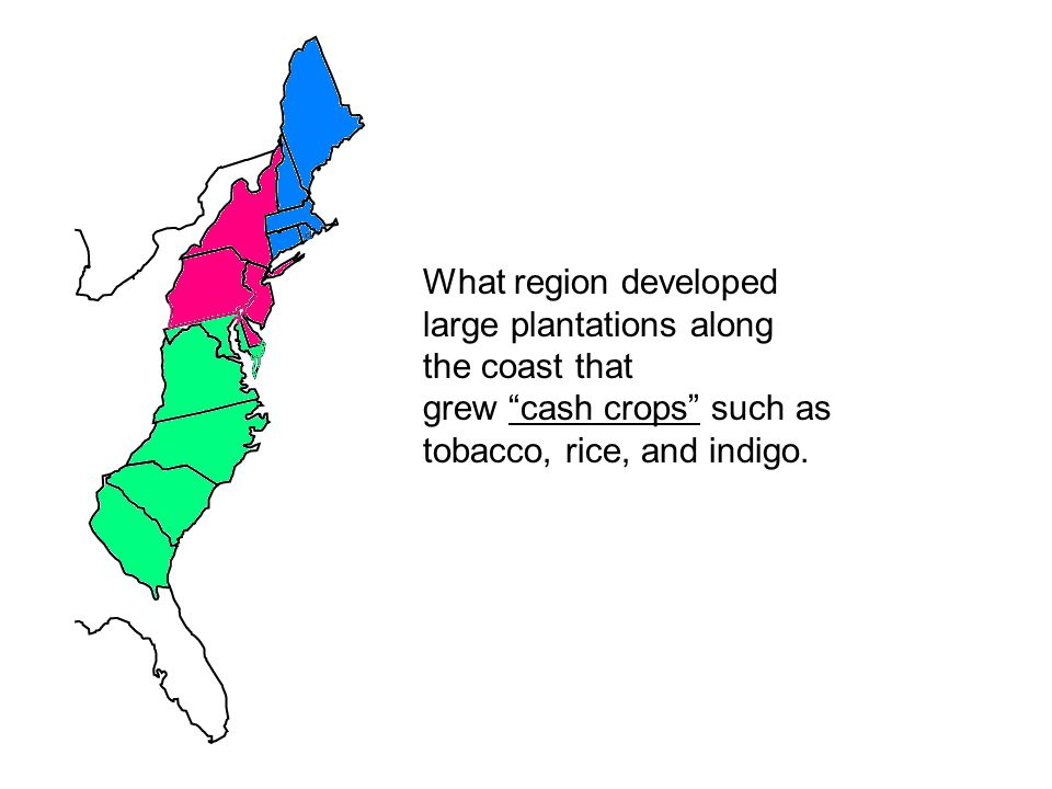 """What region developed large plantations along the coast that grew """"cash crops"""" such as tobacco, rice, and indigo."""