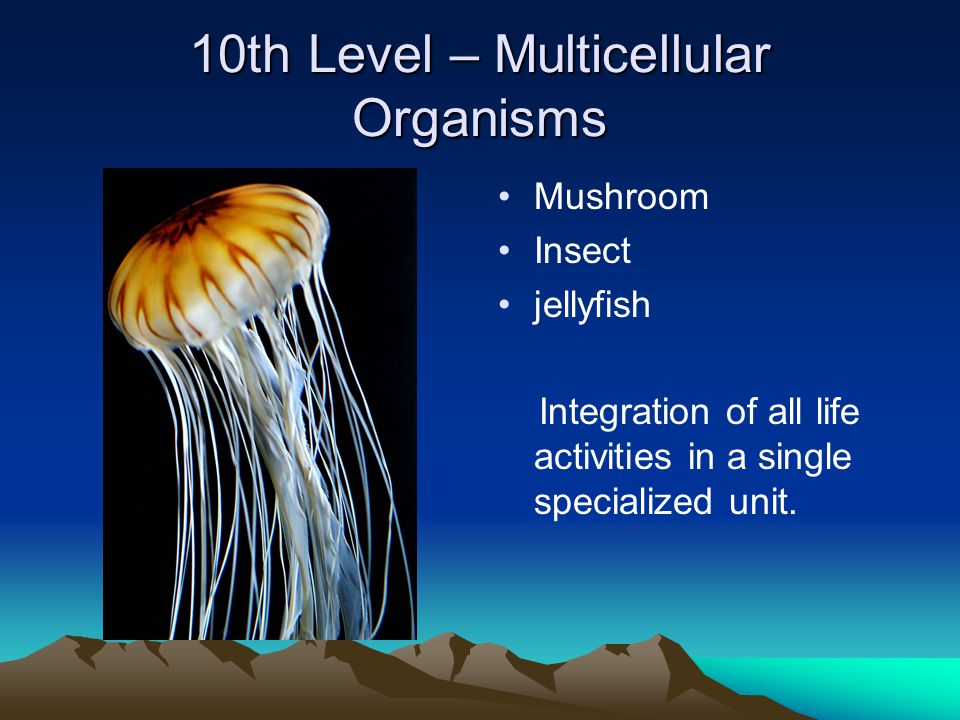 10th Level – Multicellular Organisms Mushroom Insect jellyfish Integration of all life activities in a single specialized unit.