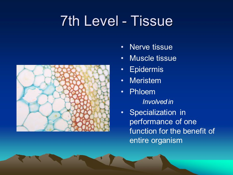 7th Level - Tissue Nerve tissue Muscle tissue Epidermis Meristem Phloem Involved in Specialization in performance of one function for the benefit of entire organism
