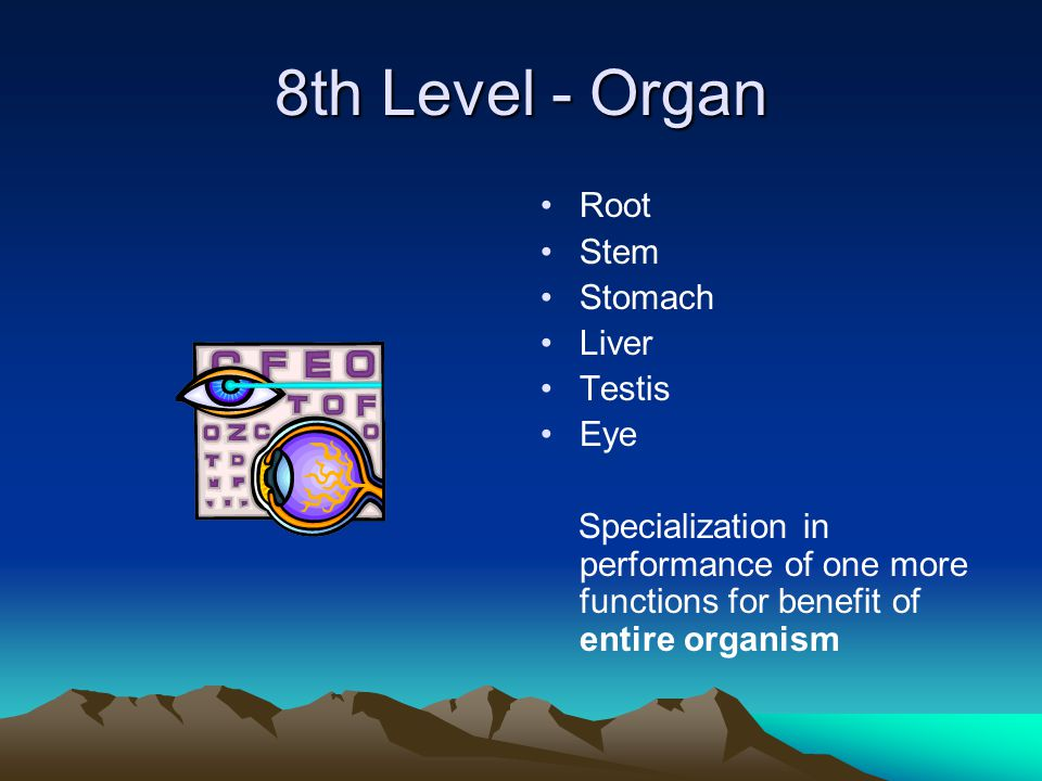 8th Level - Organ Root Stem Stomach Liver Testis Eye Specialization in performance of one more functions for benefit of entire organism