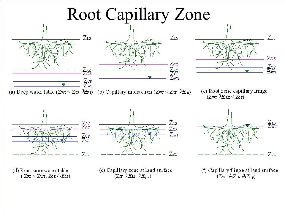 Root Capillary Zone