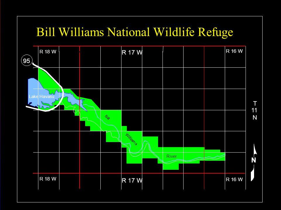 R 18 W R 17 W R 16 W T 11 N Lake Havasu River 95 N Bill Williams National Wildlife Refuge