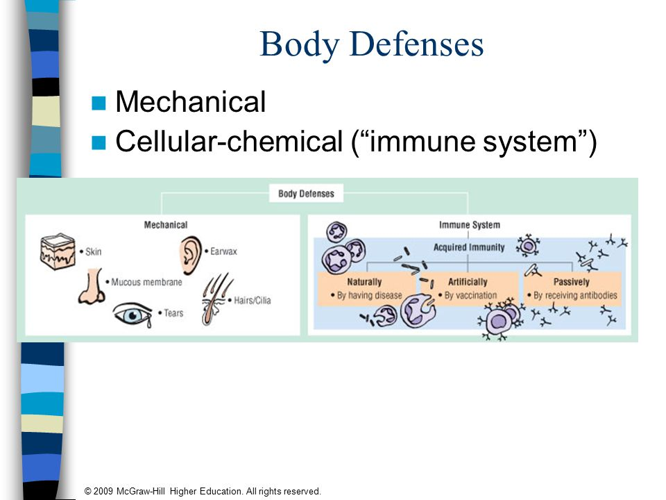 "© 2009 McGraw-Hill Higher Education. All rights reserved. Body Defenses Mechanical Cellular-chemical (""immune system"")"
