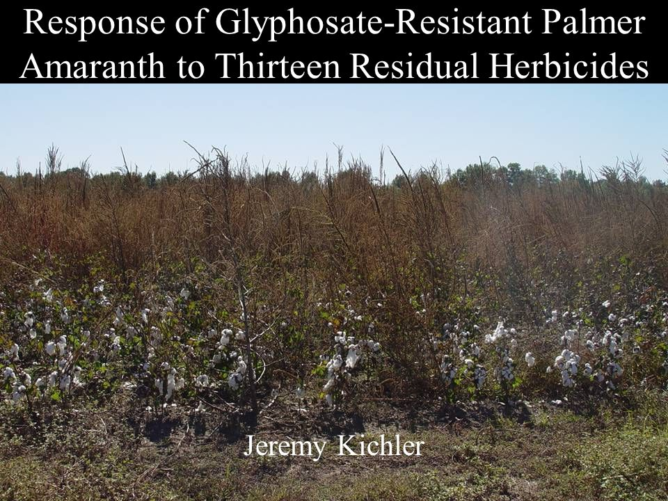 Response of Glyphosate-Resistant Palmer Amaranth to Thirteen Residual Herbicides Jeremy Kichler