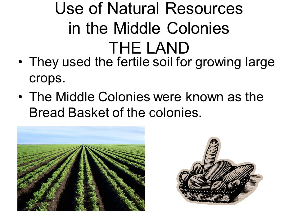Use of Natural Resources in the Middle Colonies THE LAND They used the fertile soil for growing large crops. The Middle Colonies were known as the Bre