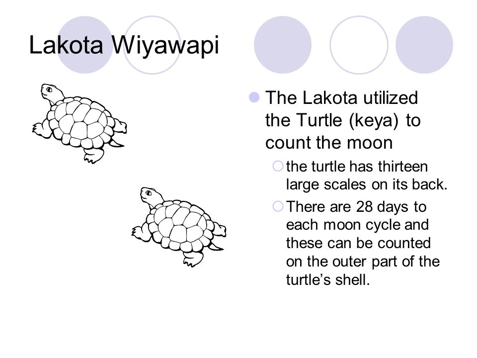 Lakota Wiyawapi  There are four phases of the moon (two hands and two feet)  There are seven increments between each moon phase (seven parts to the turtle)  4 x 7 = 28 days = one moon or month x 13 new moons = one year cycle